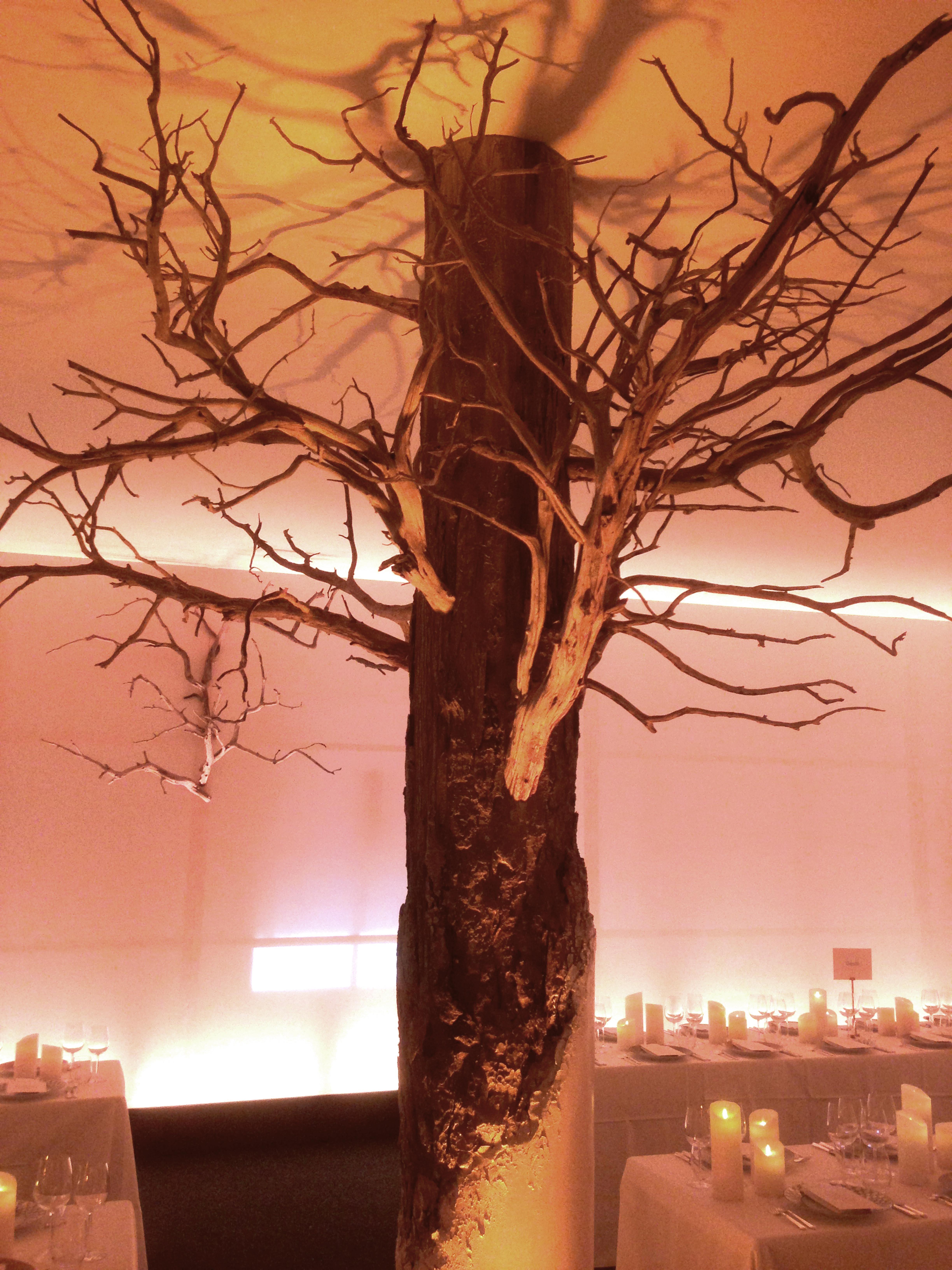 faux arbre arbres corentin meige d corateur d cor vaud suisse d coration corentin m. Black Bedroom Furniture Sets. Home Design Ideas
